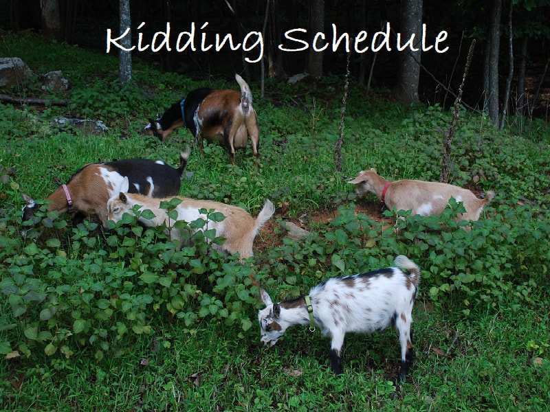 Kidding Schedule